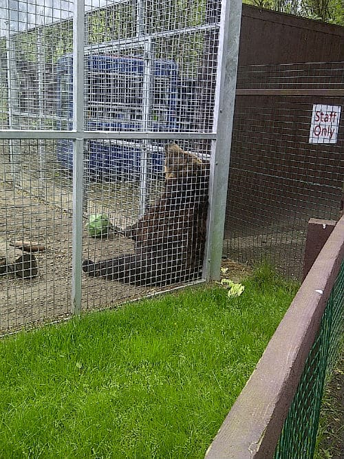 Bears at Five Sisters Zoo