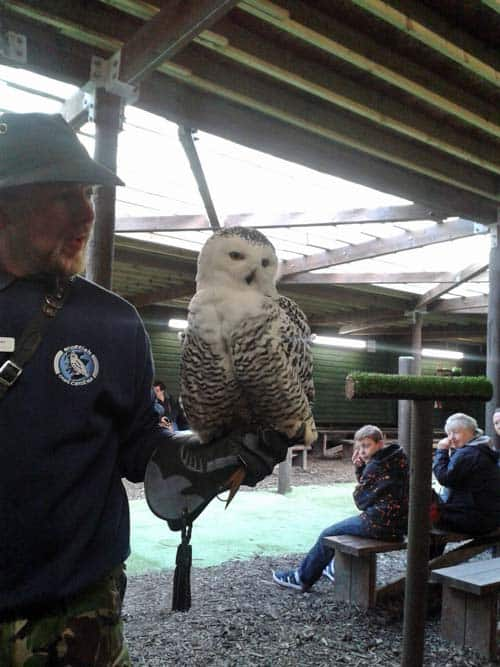 Owl at Scottish Owl Centre