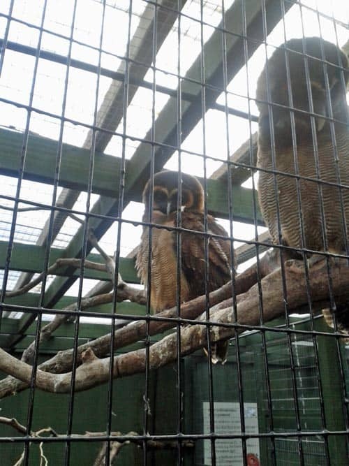 Owl at at Scottish Owl Centre