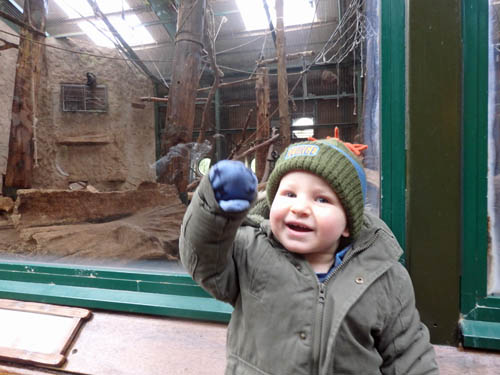 Toddler at Chester Zoo