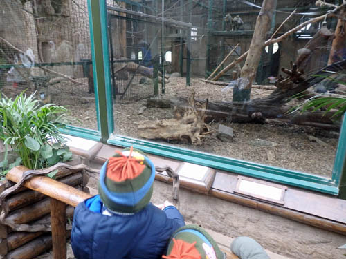 Kids at Chester Zoo