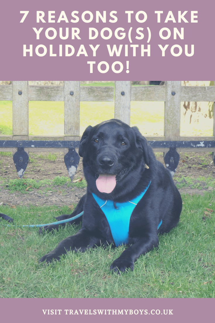 7 Reasons Why You Should Take Your Dogs On Holiday With You Too!