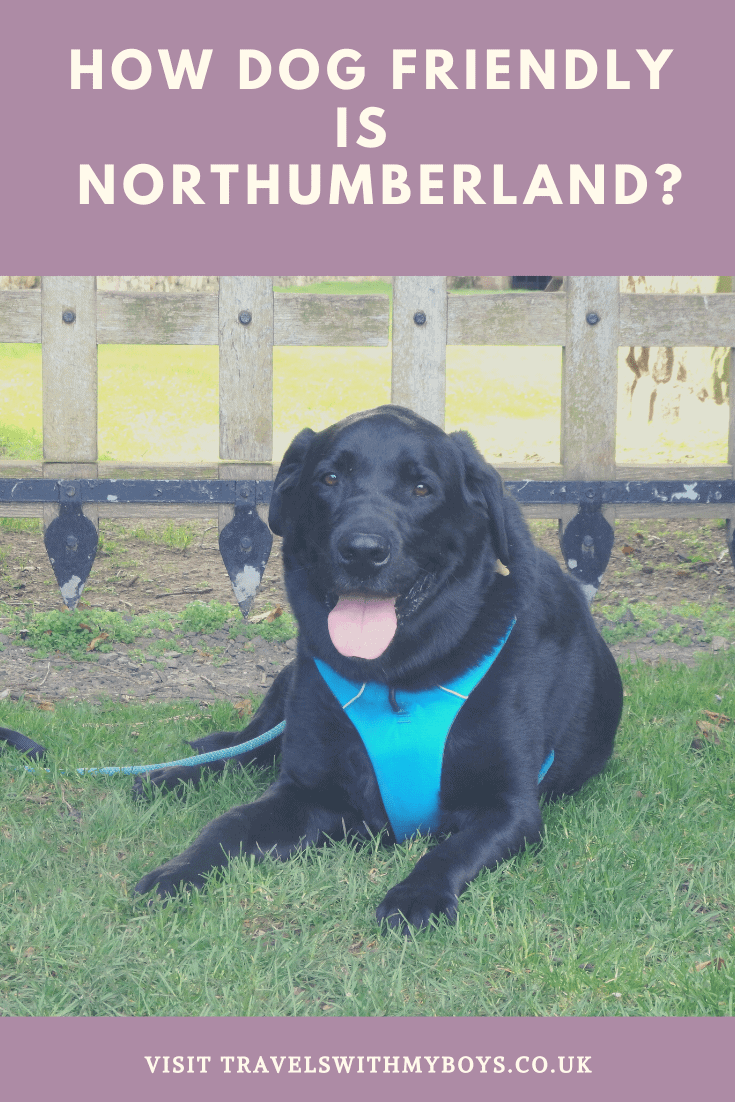 Read just how dog friendly Northumberland is.