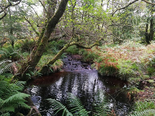 Small stream on Arran