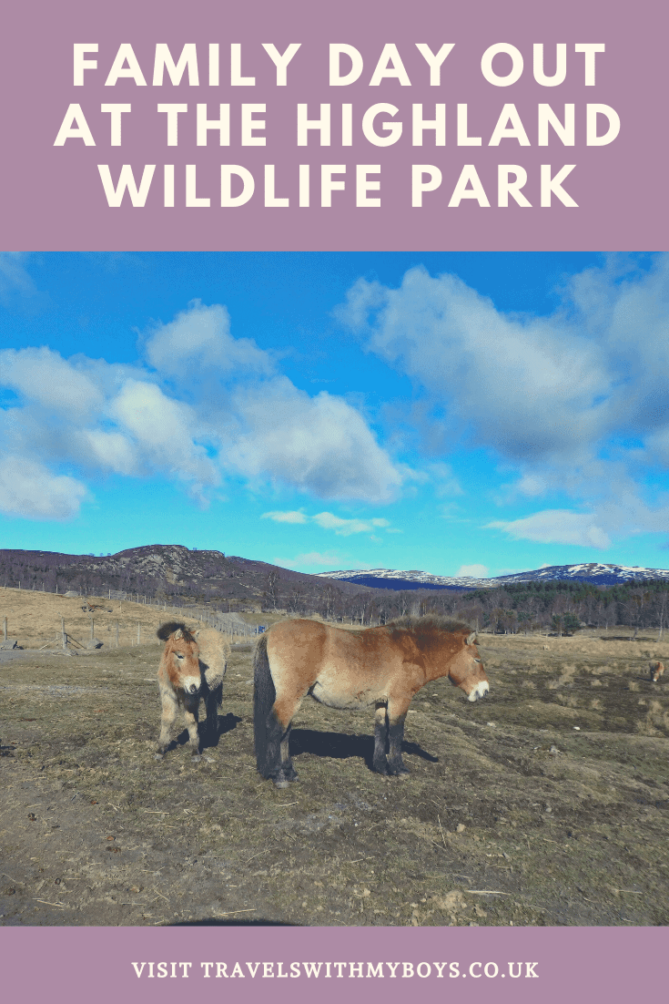 Family Day Out at Highland Wildlife Park | Family Day Out Near Aviemore Scotland