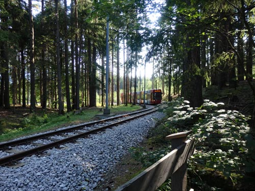 Forest tram from Igls to Innsbruck